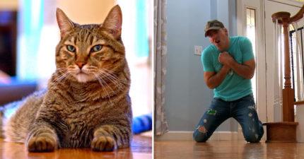 影/男子裝死測試「個性像狗狗」的貓皇 他一倒下喵星人「馬上跑過來」結果超意外!