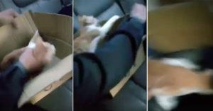 台灣某高中生「用力塞貓」的虐待影片流出,好友跳出護航:他們可能比你們愛動物...