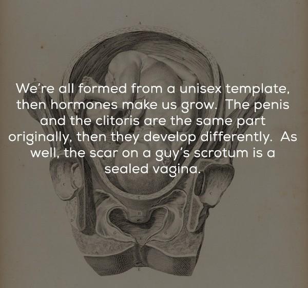 17個不信你敢用來當「約%台詞」的淵博性知識。注意他陰囊上的「縫線」曾是陰道...
