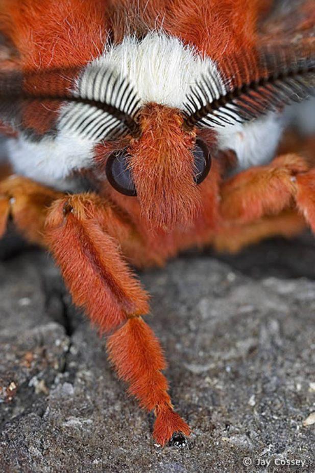 10種最接近外星生物的奇葩昆蟲,而且一點都不好吃啊!