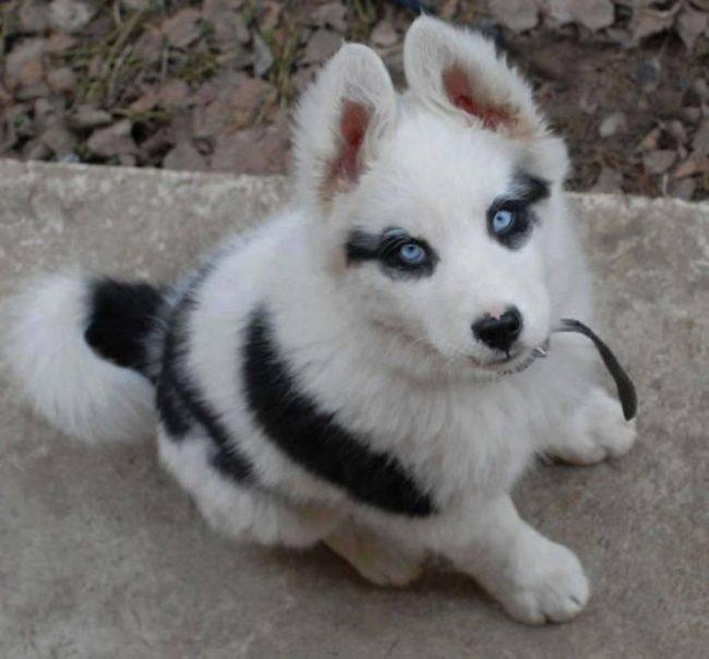 24個一生最多只能看到一次「上帝不小心搞錯基因」最酷動物 像眼鏡蛇的狗狗超可愛!