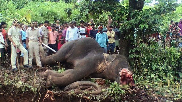「流氓大象」虐殺15人遭100人射殺處決,獵人嘆:逼不得已...