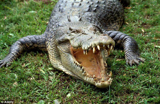 漁夫抓螃蟹失蹤一周,尋獲時在鱷魚嘴裡「吃到只剩下半身」...