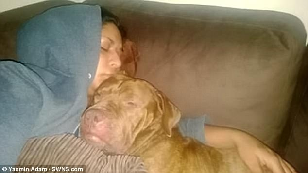 女主人手臂被撕肉啃骨躺在血泊之中…從小抱著睡養了9年的可愛狗狗後突然「殺紅眼」手臂扯掉往死裡咬!