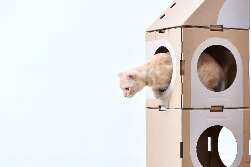 簡單又環保的台灣設計「可重複拼貓貓紙箱」 讓國外網友狂讚:是貓奴就需要!