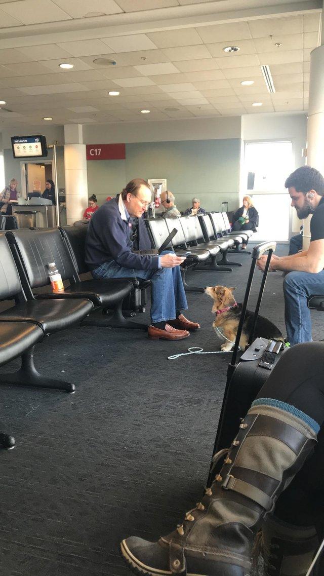 超有靈性的可愛柯基發現機場男子狀況不對,跑去「用愛安慰」功德無量!
