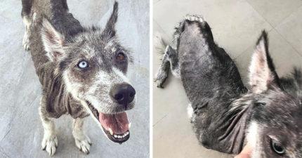 可憐浪浪「瘦成皮包骨+全身長滿癩疥」險餓死,被拯救「康復後模樣」判若兩狗讓網友嘴角上揚!