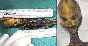 「15cm迷你外星人遺體」真實身分出爐!科學家:我們錯得太徹底