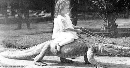 15個想養還真的需要勇氣的「最怪異寵物」但帶出門絕對超吸睛!他「跟草尼馬一起衝浪」畫面獵奇到不可思議