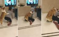 女飼主假裝昏倒想看愛犬反應,下一秒「竟遭趁機撿屍」網笑翻:電動馬達膩?(影片)