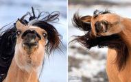 這匹馬不知道自己不是人類!23張照片神複製迪士尼《小馬王》看幾張心情好到不行!