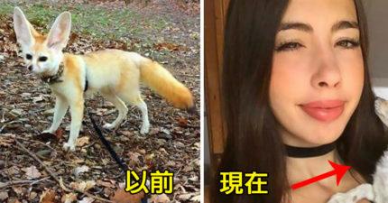 素食網紅逼「肉食小狐狸」吃素 上傳「毛孩病態照」堅持:只是過敏