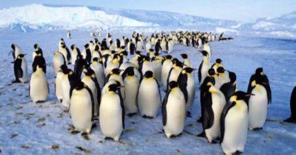 企鵝秘密巢穴曝光!探險家南極新發現「150萬隻企鵝」的避難所,專家拍到瞬間「改寫絕種歷史」