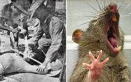19個看了雞皮疙瘩掉滿地的「世界級詭異知識」,甘迺迪爆頭後屍體解剖照曝光