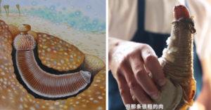 長得超尷尬的「可食用野生肉棒」圖鑑曝光!超色「GG魚」還能磨成粉末超好吃!(10張)
