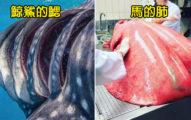 鯊魚受精卵長這樣?20個讓你忍不住「狂放大」的稀有照片