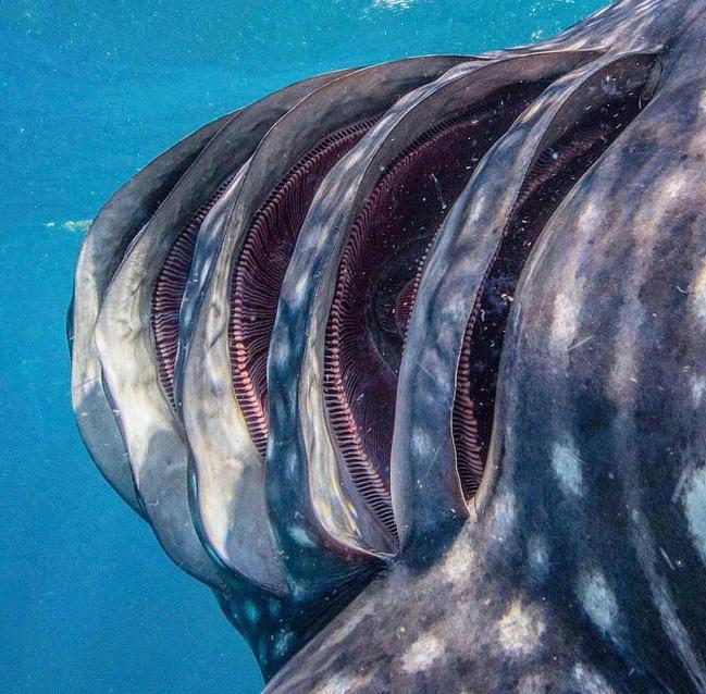 鯊魚受精卵居然長這樣?20個讓你忍不住「狂放大」的稀有照片