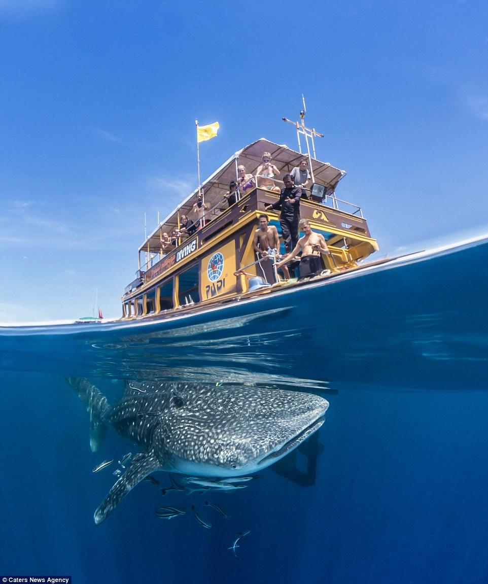 12張動物「正在潛水美照」看到「鯨魚在船底的部分」還是打了個冷顫啊!