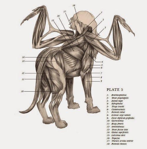 天才醫生沉迷「畸形鹿腿童」不被世人接受 強行展出「鹿幼子」證明神話存在