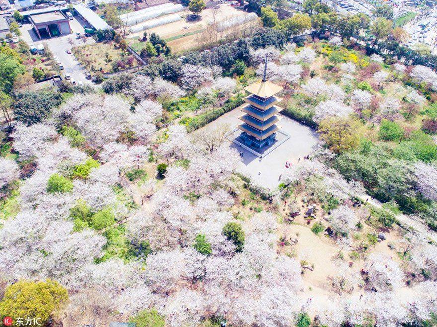 賞櫻只能飛日本?22張會讓你手癢秒刷機票的「中國櫻花海粉嫩美景照」!