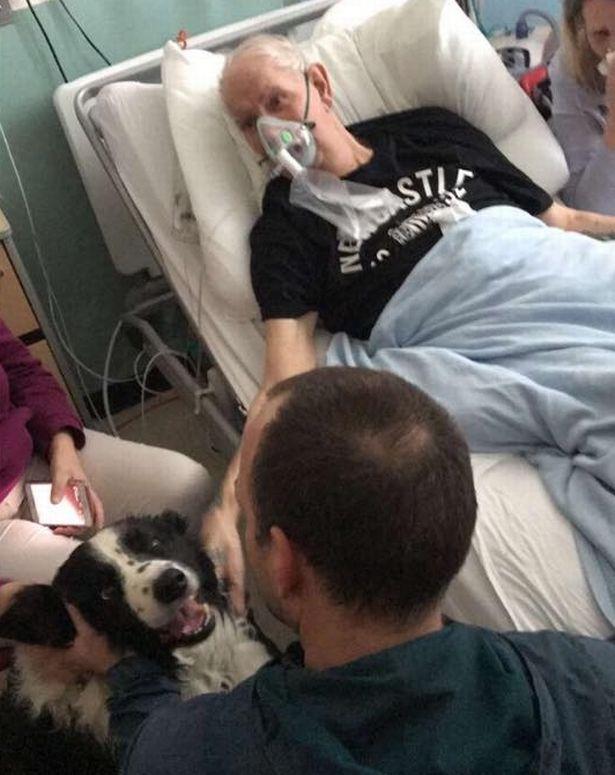將死爺爺最後心願「見愛犬一面」,超感人醫療團隊打破常規圓夢。狗狗到了他才呼出最後一口氣