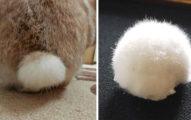 超萌「毛茸茸兔尾巴」被拔下來?你千萬不要亂摸!