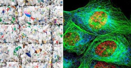 科學家意外創造「吃掉塑膠的方法」 地球有救了!
