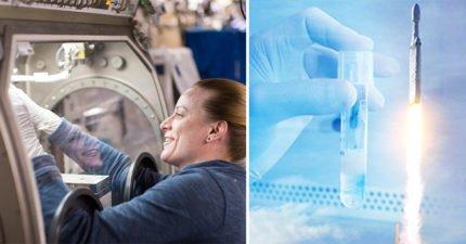 NASA把「男性的液體子孫」發射上太空,下一步就是「在太空製造人類」(影片)