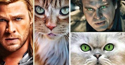 8張把超級英雄們「貓化」的《復仇者聯盟》貓版形象照,「黑寡婦」性感魅惑綠眼美慘!