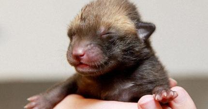 撿到一隻超萌毛茸茸小黑貓「鼻子特別大」 真實身分讓她樂歪!