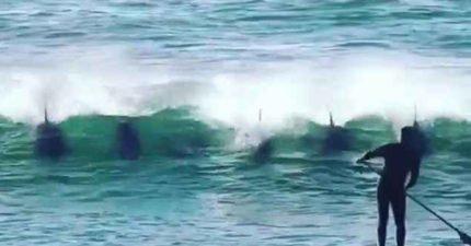 玩SUP前方浪中出現海豚大軍 下一秒海豚「調皮舉動」讓他超驚喜