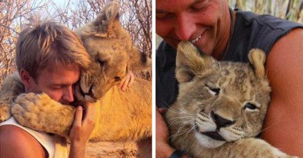 兩人把「一手養大的小獅子」放回野外,結果獅子從未忘記「一見面馬上撲倒」鑽進懷裡撒嬌:是爸爸耶~(影片)