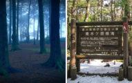 Youtuber闖自殺森林 驚見「想找閻羅王」的人上前擁抱:沒事的...救回微弱呼吸