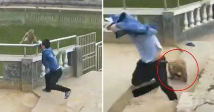 男子推猴子下水下秒「被悟空逆襲」 遊客拍手叫好:現世報!