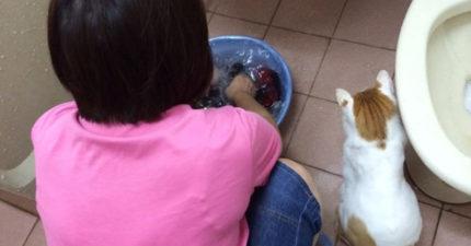 媽媽撂狠話「敢帶貓回來就丟掉!」 結局卻讓她欲哭無淚