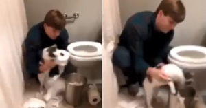 回家驚見廁所下雪 貓皇被鏟屎官架著收垃圾「自己闖禍自己收拾」!
