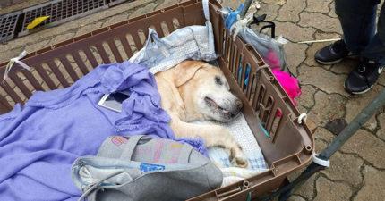 阿嬤手推車「帶年老狗狗散步」 畫面惹哭全網:是責任也是愛!