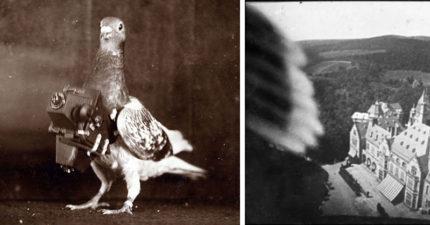 以前沒航拍機怎辦?超萌「鴿子攝影師」罕見作品照曝光!