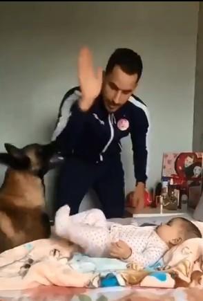 爸爸舉起手要揍小寶寶 這隻狼犬瞬間飛撲「露牙警告」:別動他!