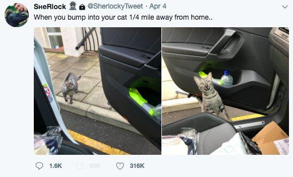 主人開車離家0.4公里忽然在路上巧遇自家愛貓...貓咪被抓到做壞事爆笑表情讓網友笑噴 (影片)