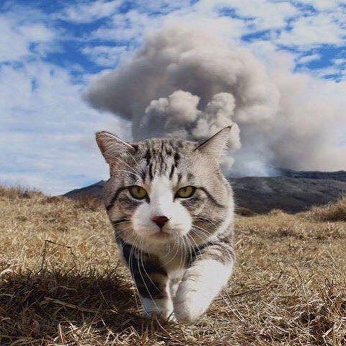 真正的「旅行貓咪」!愛出門喵星人背後藏堪坷過去(游泳影片)
