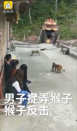 惡男推猴子下水 下秒慘被「悟空逆襲」反將一軍!遊客拍手叫好:這就叫現世報