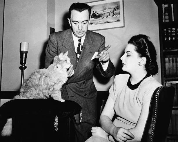 二戰時期這隻貓咪被當成「控制腦波兵器」,人類跟他對上眼10秒就會「身體開始自行搖晃」