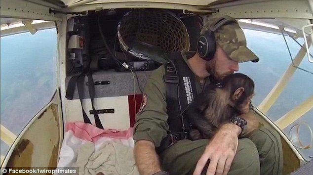 暖男飛行員開飛機「護送可愛黑猩猩寶寶」影片爆紅!「當親生兒子照顧」他:我寧願這一切從沒發生 (影片)