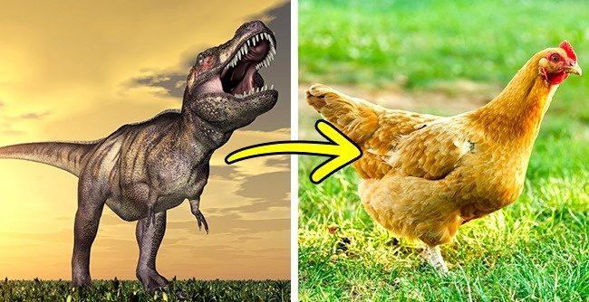 16個「讓你很想嗤之以鼻的事實」,最接近恐龍的後代「竟然是雞!」