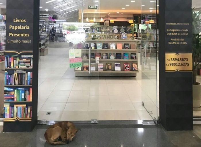 流浪狗狗突然溜進書店「偷書」,結果「他選的書」改變了他的一生!(影片)