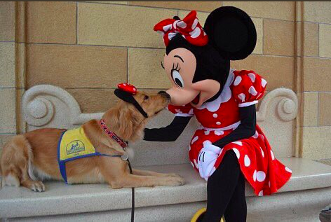 為了感謝服務犬他們「帶狗狗去迪士尼樂園遊玩」,爆萌造型髮箍「跟布魯托玩得超嗨畫面」讓全網都被融化了!(13張+影片)