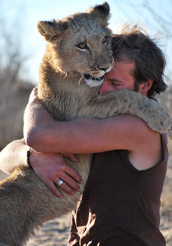 一手養大小獅子被放回野外 看到爸爸「開心撲上去」討抱抱:才不會忘記你~