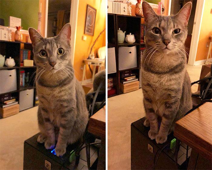 27張「貓奴絕對會含淚點頭」的貓咪搗亂照,再次證明喵星人是世界上最邪惡又可愛的生物!