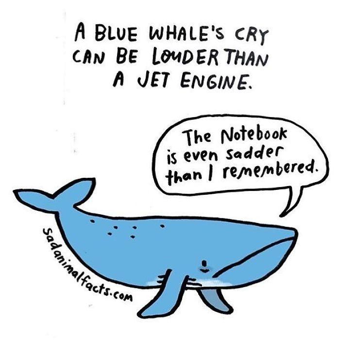 20個人類永遠不懂的「動物傷心事」害人看著看著就哭了...